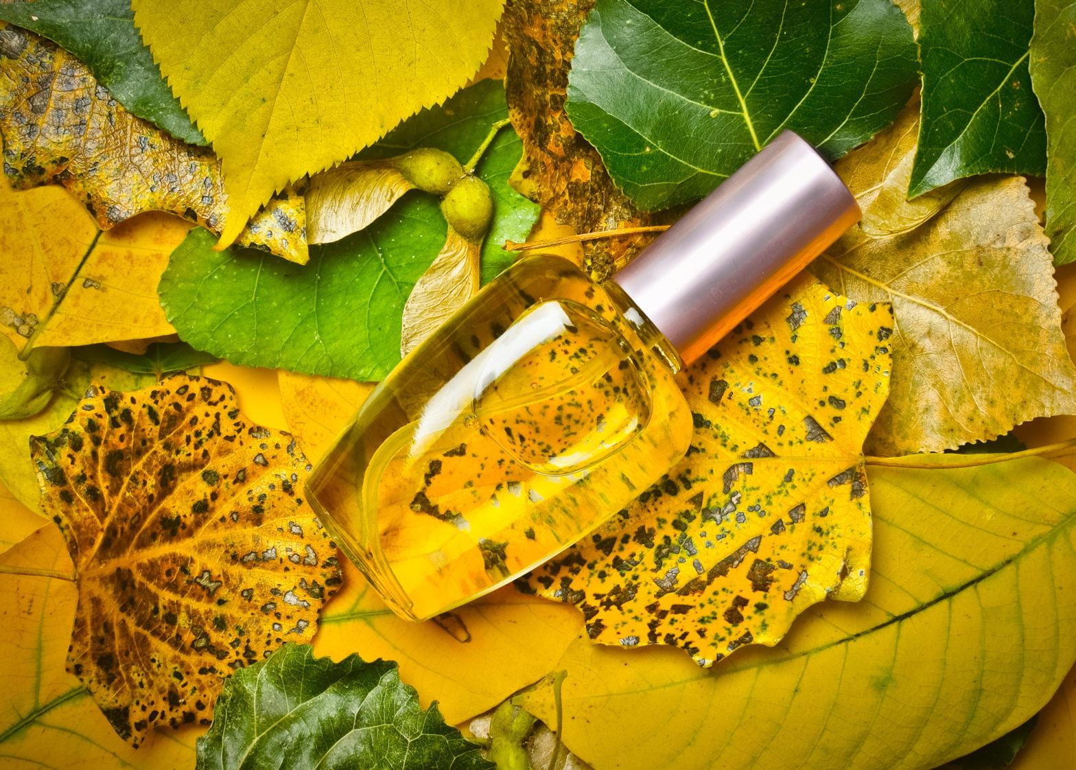 العطر في فصل الخريف كنوز الطيب